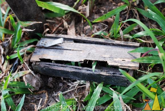 Explosive rat trap, War Museum, Siem Reap, Cambodia, landmine, mine, PMD-6M, rat trap, wooden box