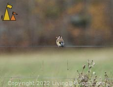 Goldfinsh on the fence, Angarn, Sweden, bird, European Goldfinch, Carduelis carduelis