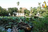 Lotus pond, Wat Ek Phnom, Battambang, Cambodia, temple, pond, lotus, Indian lotus, Nelumbo nucifera, boat, pier