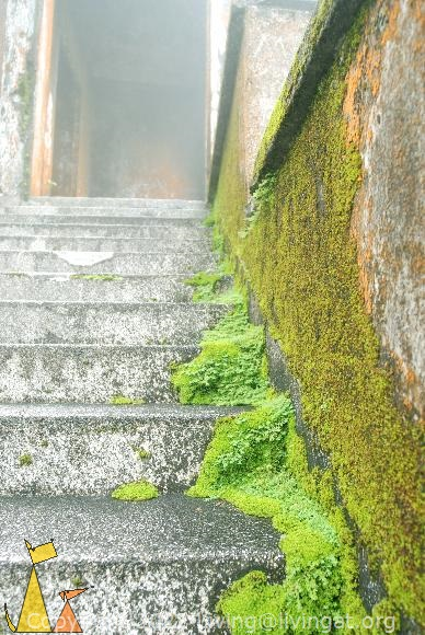 Mossy stairs, Bokor Hill Station, Kampot, Cambodia, casio, stairs, moss