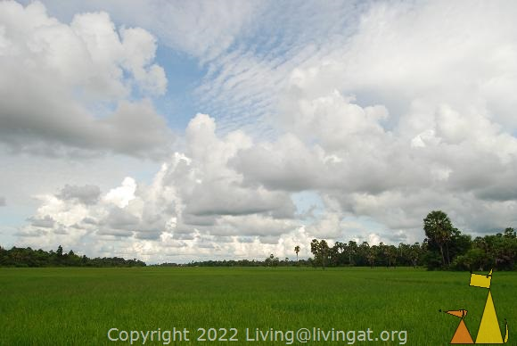 Rice field, Siem Reap, Cambodia, plant, Rice, Oryza sativa, green, dramatic sky, sky, rice field