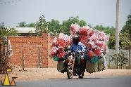 Road racer, Cambodia, moped, well packed, red, Homo sapiens, Human