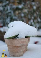 Snow covered, Skeppargatan, Stockholm, Sweden, skeppargatan 11, snow, plant