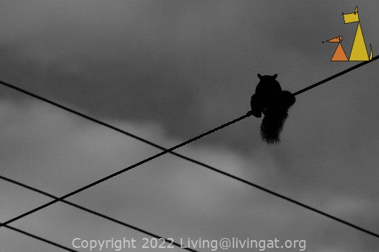 Squirel on a Wire, Boquete, Panama, black and white, wires, squirel, mammal, sky, Sciurus granatensis