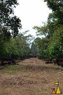 Stoned road, Banteay Samre, Siem Reap, Cambodia, stoned, road, temple, Angkor