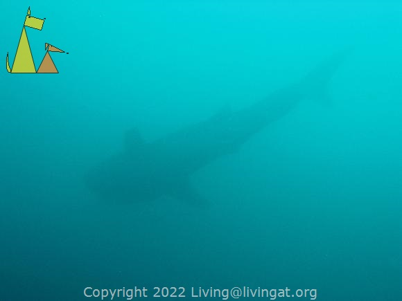 Whale Shark in the Distance, Isla Coiba, Panama, underwater, shark, Rhincodon typus, silhouette, blue