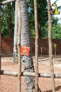 Wood fence, Landmine museum, Siem Reap, Cambodia, landmine, sign, scule and bones, warning, minefield, fence
